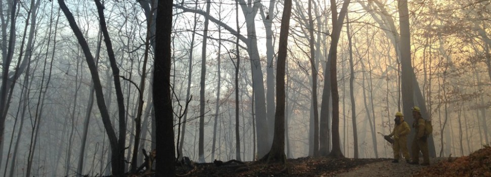 2015 Photo Contest Runner-up- Prescribed Burn, McClaughry Spring Woods near Palos, Daiva Gylys