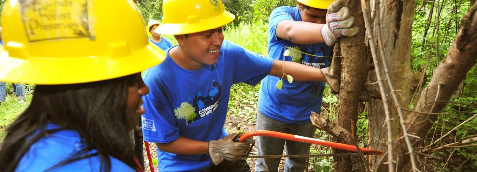 Chicago Conservation Leadership Corps interns removing buckthorn, an invasive species.