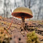 2016 Photo Contest Winner Third Place - Fungus on Dead Wood, Schiller Woods, Andrea Baldi