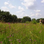 Runner Up: Hikers and purple prairie clover, Bluff Spring Fen near Elgin, Alice Brandon