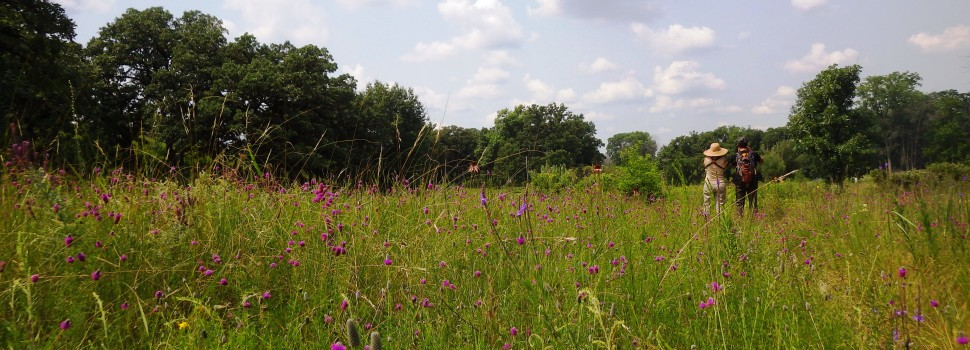 Runner Up: Hikers and purple prairie clover, Bluff Spring Fen near Elgin, Alice Brandon