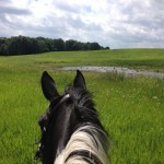 Runner Up: Rider on Galloping Hill, Spring Creek near Barrington Hills, Jane Clement
