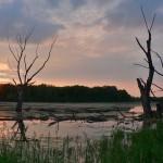 Second Place – Palatine Marsh by Bob Callebert of Des Plaines