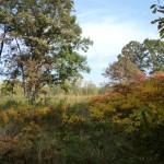 Third Place: Sand Ridge Nature Preserve, near Calumet City, Alice Brandon