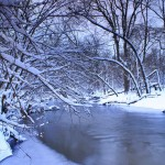 Third Place – Bunker Hill Woods by William Callebert of Des Plaines