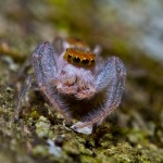Best fauna: Jumping spider, Crabtree Nature Preserve near Barrington, Edward Boe