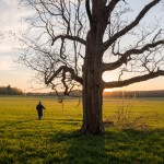 "2015 Photo Contest Winner ""People in the Preserves""- Steward Jim Voris walking during an early spring day, Galloping Hill Prairie in the Spring Creek forest preserve near Barrington, Jim Root"